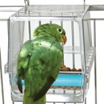parrot cafe seed corral-large